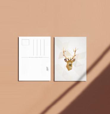 Carte postale Cerf recto verso